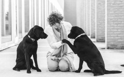 Bang voor honden… of toch niet?